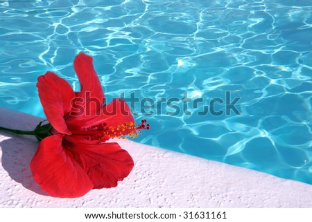 Red hibiscus by pool