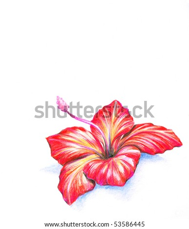 stock photo Red hibiscus flowerPicture I have created myself with colored