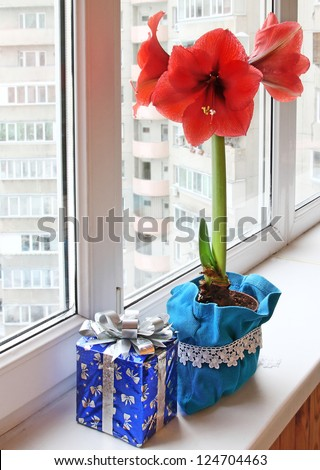 Red hippeastrum and box with a gift on a window-sill