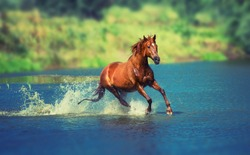 red horse is running across the blue lake