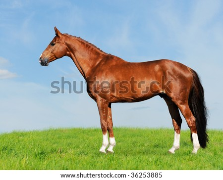red horse on the blue and green background, on the meadow, collage paint, horse form