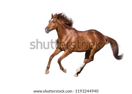 Red horse run gallop isolated on white background Foto stock ©