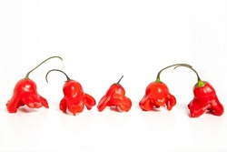 Red hot spicy chilli pepper Jamaican bell, Mad hatter or Bishop's crown isolated on a white background