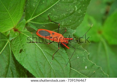 Red insect on leaves #739196467