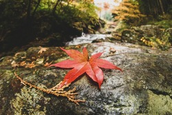 Red Japanese maple leaf on the rock with blurred mountain stream flow in background, nature beauty concept