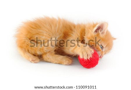 red kitten gnawing a red clew, isolated