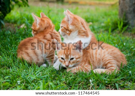 red kitten in the grass