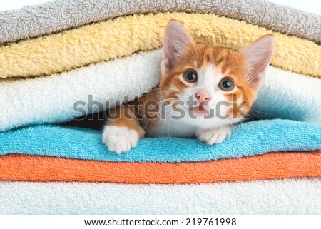 Stock Photo Red kitten lying on a clean towel