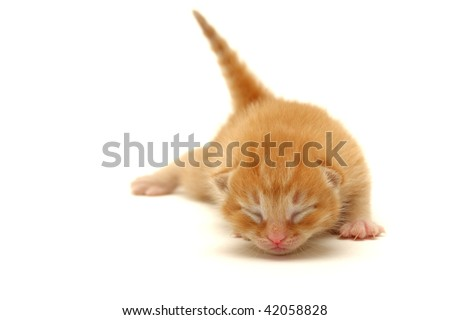 Red Kitten on the floor isolated on white background