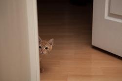 Red kitten peeking out of the corner