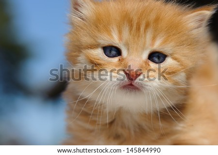 Red kitten playing outdoors
