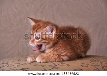 Red kitten portrait on vintage background