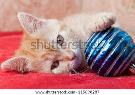red kitten put one paw on blue Christmas ball