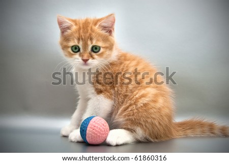 Red kitten with a ball on a gray background