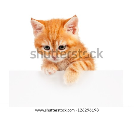 Red kitten with empty board on white background
