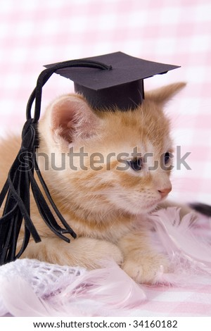 red kitten with graduated hat on.