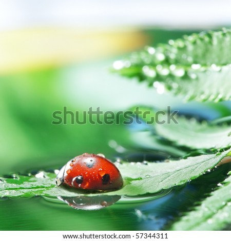 red ladybug in water on leaf