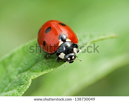 red ladybug on a green leaf in the grass, close-up blurred #138730049
