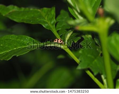 Red ladybug on green branch grass