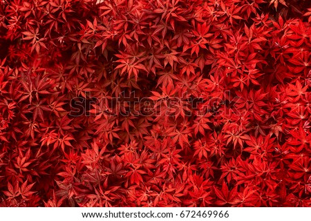 Stock Photo Red leaf texture. Leaf texture background