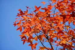 Red leafs on tree