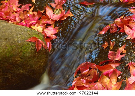 Red leaves near waterfall