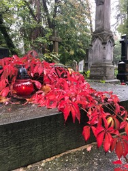 Red leaves on a cemetry. Autumn moody landscape.