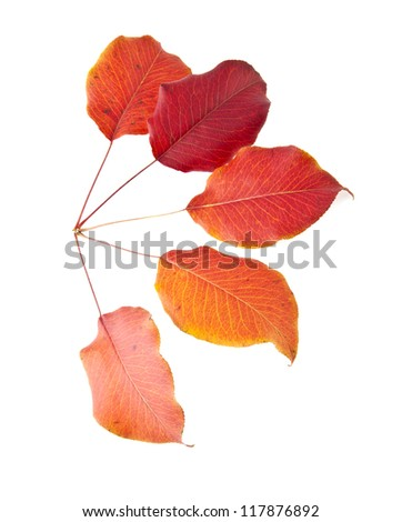 red leaves on a white background