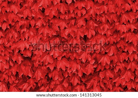 Stock Photo Red leaves over a wall
