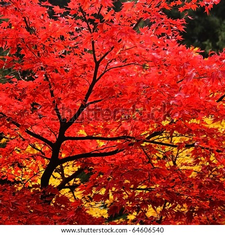 Red leaves with yellow leaves