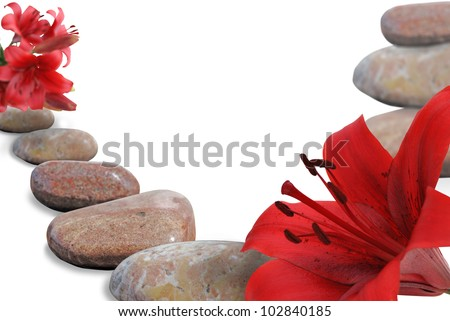 red  lily on stone on white background