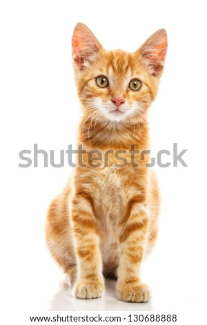 Red little cat on the isolated background