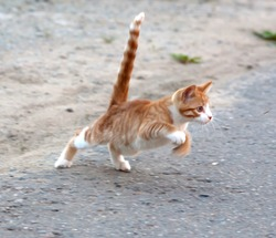 Red little kitten hunt by the mosquito on road on sunny day on summer