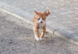 Red little kitten jump on sunny day on summer