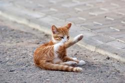 Red little kitten play on sunny day on summer