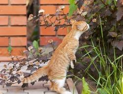 Red little kitten sniff a flower on sunny day on summer
