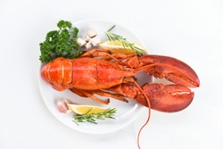 Red lobster dinner seafood with herb spices lemon rosemary served table in the restaurant gourmet food healthy boiled lobster cooked / Fresh lobster food on a white plate background