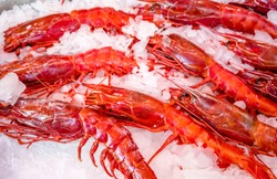 Red lobsters - a real delicacy for lovers of tasty food. Fishing artels catch this species of crustaceans and keep them in ice for sale to shops or restaurants.