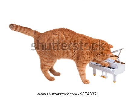 Red Lovely Kitten Is Playing On a Toy Piano Isolated On White Background