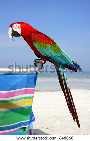 Red Macaw on the beach
