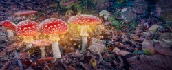 Red magic mushrooms glowing in the mystery dark forest. Fantasy toadstool.