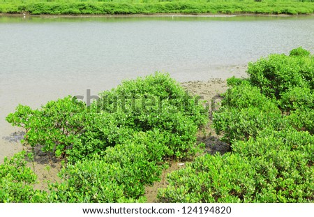 Red Mangrove wood in Hong Kong