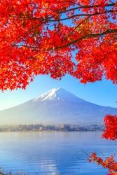 Red maple leaf and Mt. Fuji in morning at lake Kawaguchiko, Japan