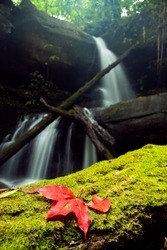 Red maple leaf  fall down into the green moss with waterfall background, Man-Daeng Waterfall Pitsanulok North of Thailand