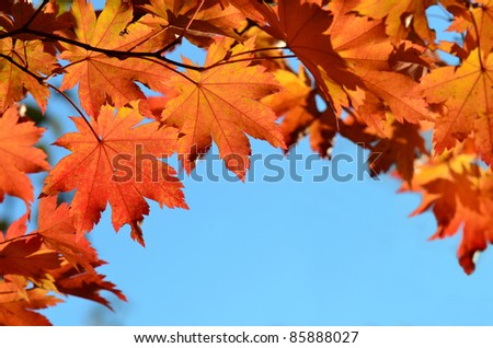 Red maple leaves, autumnal frame, golden autumn