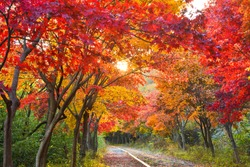 Red maple road