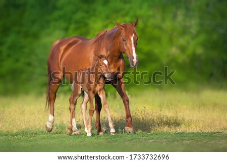Red mare and foal grazing on spring green  meadow Сток-фото ©