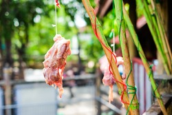 Red meat chicken skeleton hang on green bamboo for animal feed (crocodile, tiger, lion, vulture, hawk and wolf) for background or texture - retail products concept.