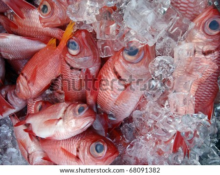 Red Menpachi on Ice for sale at a farmers market in Waimanalo on Oahu, Hawaii