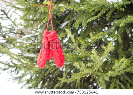 Red mittens hanging on fir tree green branches in winter park. #753125641